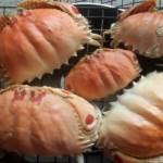 Về Hội An thưởng thức món ngon từ Cúm núm biển