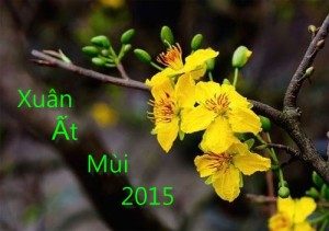 bi kip san ve may bay tet 2015