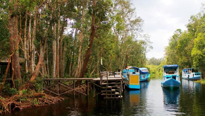 Kết quả hình ảnh cho Vườn quốc gia Tanjung Putting