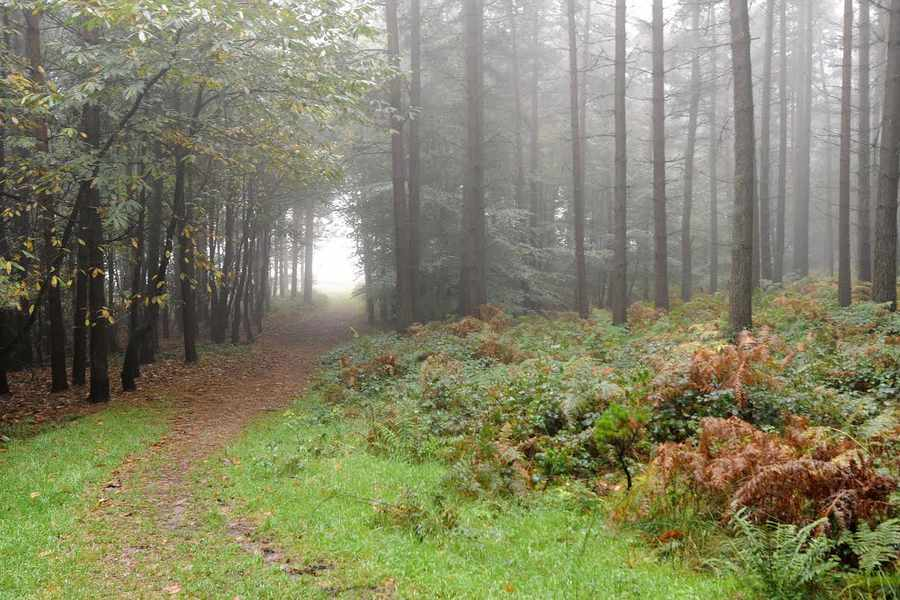 rừng Cannock Chase