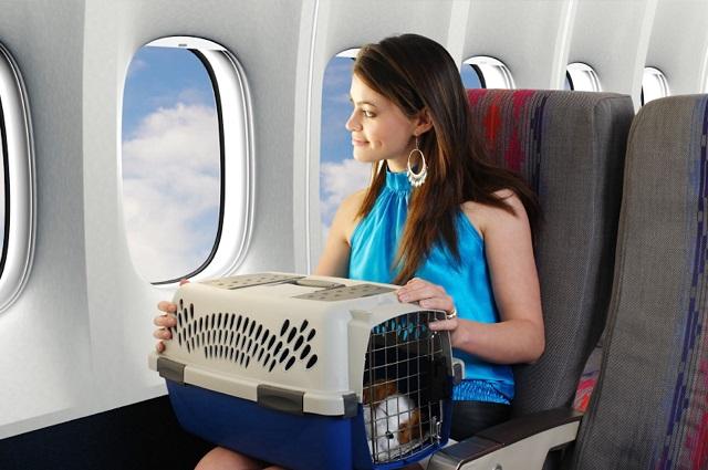 vận chuyển thú cưng