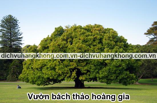 vuong-bach-thao-hoang-gia-uc