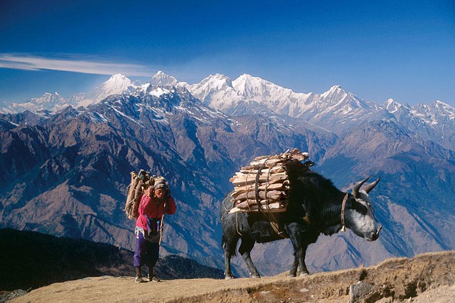 ve may bay khu hoi di nepal