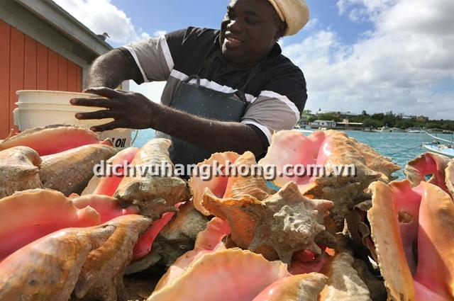 conch o bahamas Dịch Vụ Hàng Không