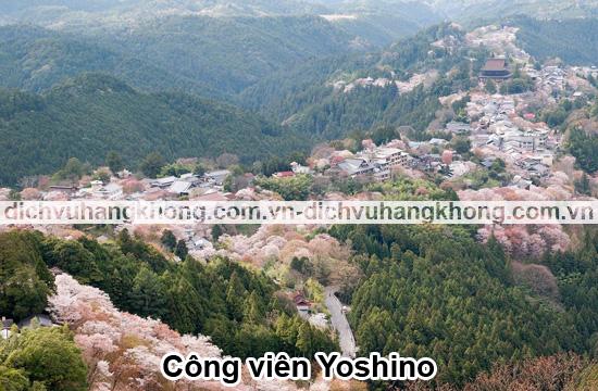 cong-vien-Yoshino