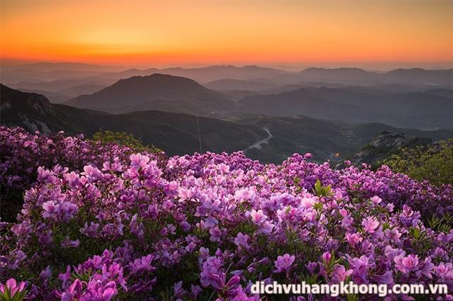 hoa do quyen Dịch Vụ Hàng Không