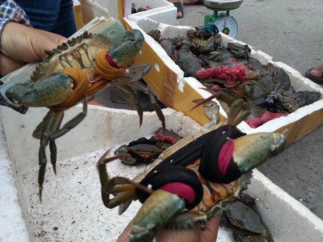 thưởng thức cua biển phú quốc